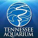 Tennessee Aquarium Military Discount